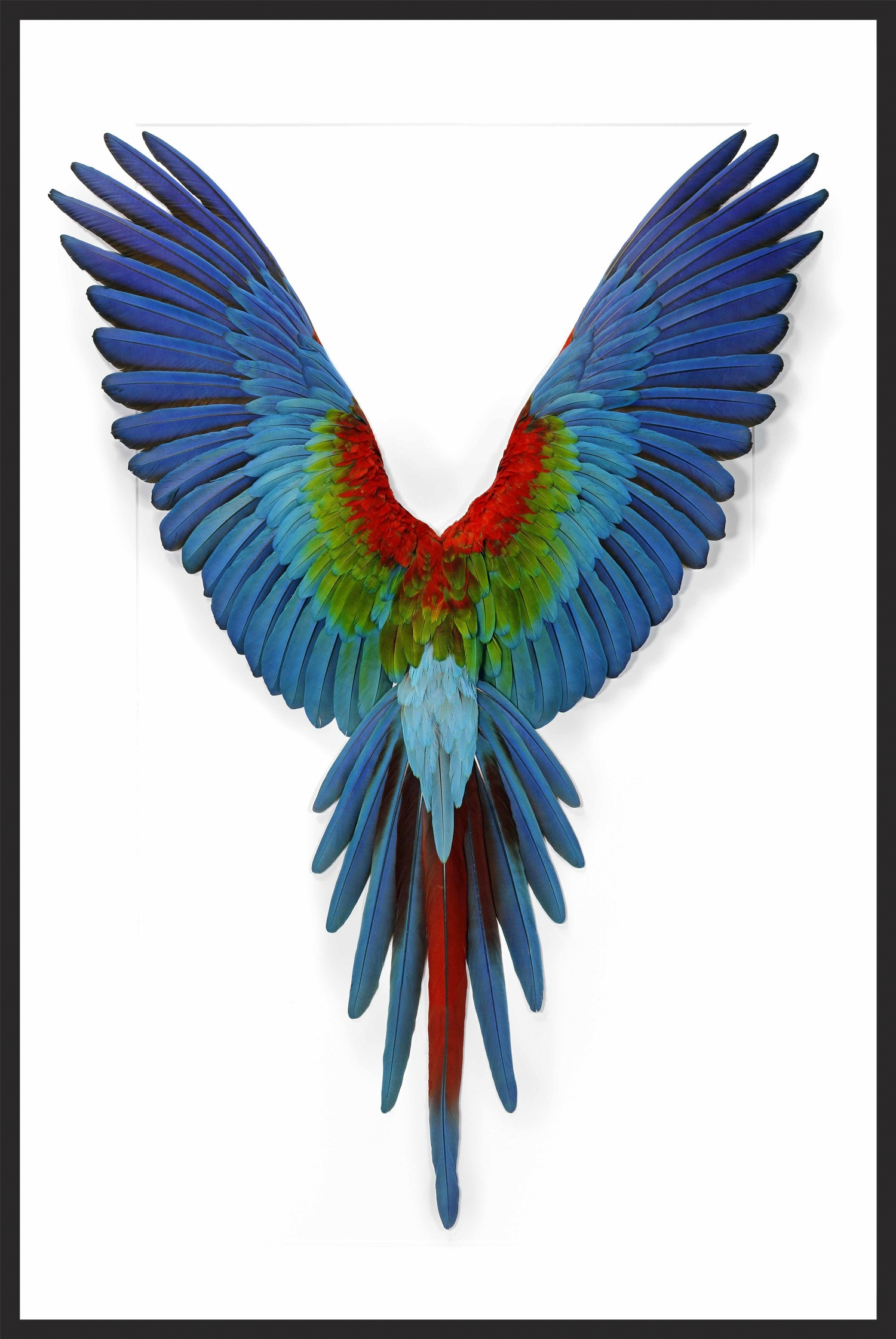 40x60 Greenwing Macaw.jpg