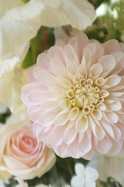 Museum Van Loon, Lute Restaurant, Ouderkerk, Amstel, bruiloft, Wedding,  Bloemen, Flowers, Florist, Bloemist, Amsterdam, Prinsengracht, Bloemenwinkel, Lifestyle, Wedding, Outdoor, Dahlia, Pastel