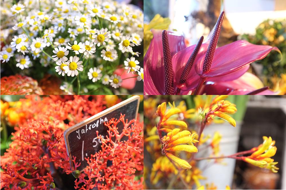 A.P Bloem, Christmas, Florist, Arrangement, Anthurium, Pinecones, Amsterdam, Bloem, Bloemist, Camomile, Kangaroo Paw, Bloemenwinkel, Kerst