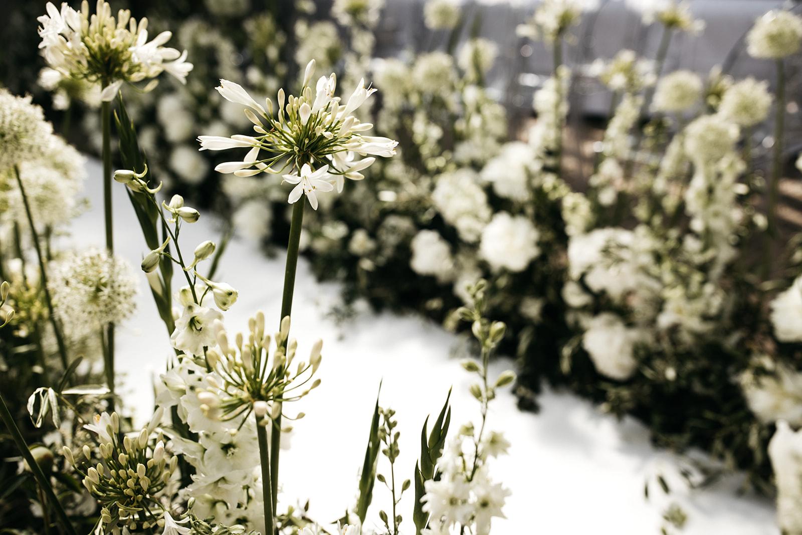 #apbloem #florist #kerkstraat #amsterdam #flowers #bloemen #bloemist #flowers #bouquet #boeket #arrangement #photoshoot #peony #bruiloft #trouwen #bloemenbezorgen #wedding #love #liefde #event #evenement #garden #tuin #bridalgown #bruidsjurk #justmarried #bridalcouple #weddingflowers #weddingphotography #weddinginspiration #white #field #veldbloemen #hortus #garden #greenhouse