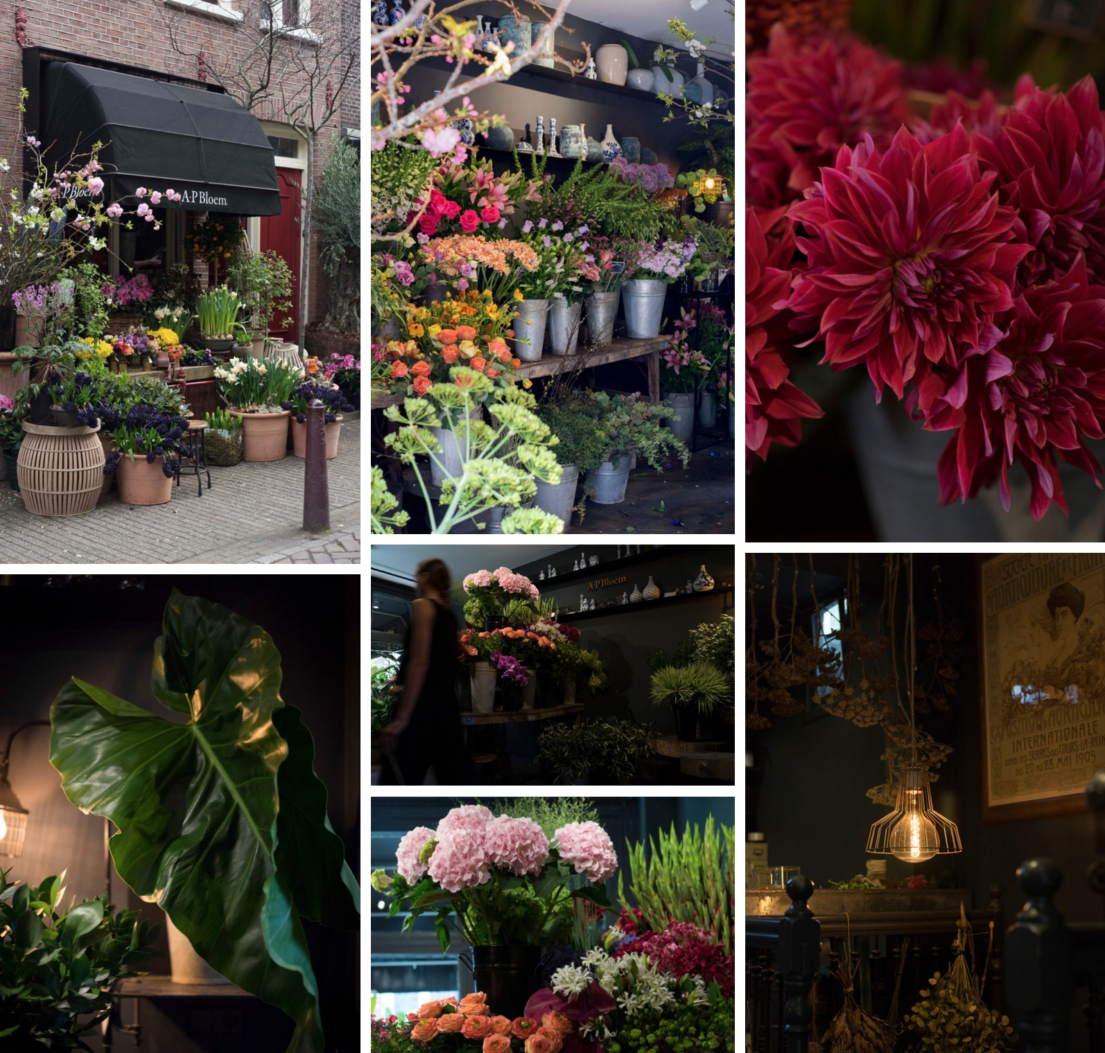 A.P Bloem Florist Bloemist Amsterdam favourite florists amsterdam Kerkstraat bloemenwinkel flower shop the shopkeepers the flower shopkeepers