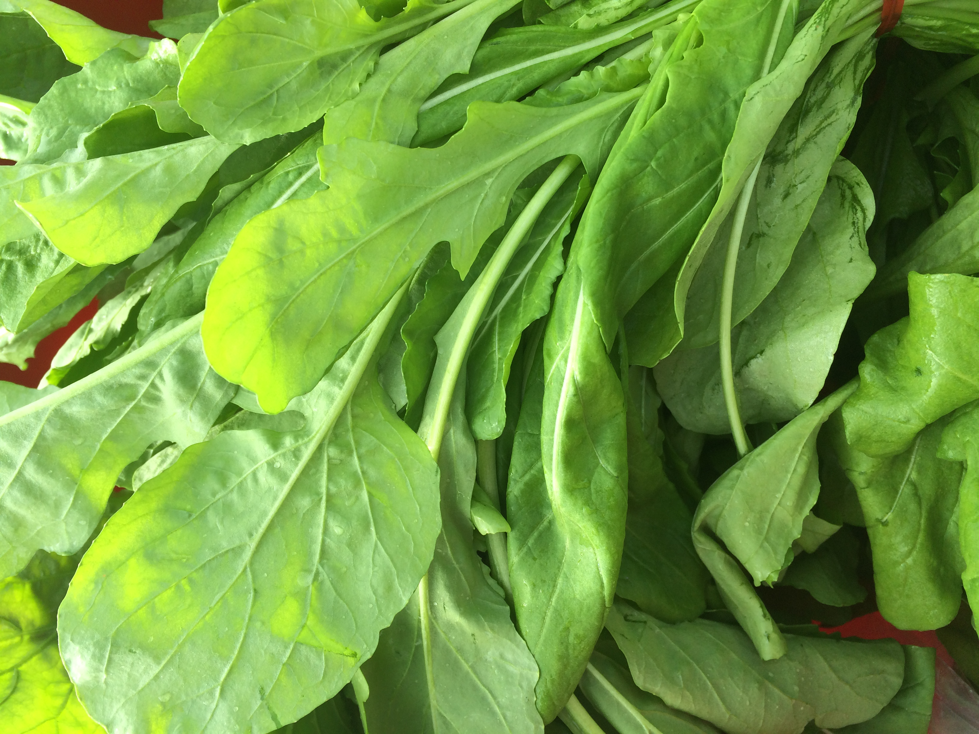 Another gorgeous contribution from Urban Eden Farms. Check out that arugula!