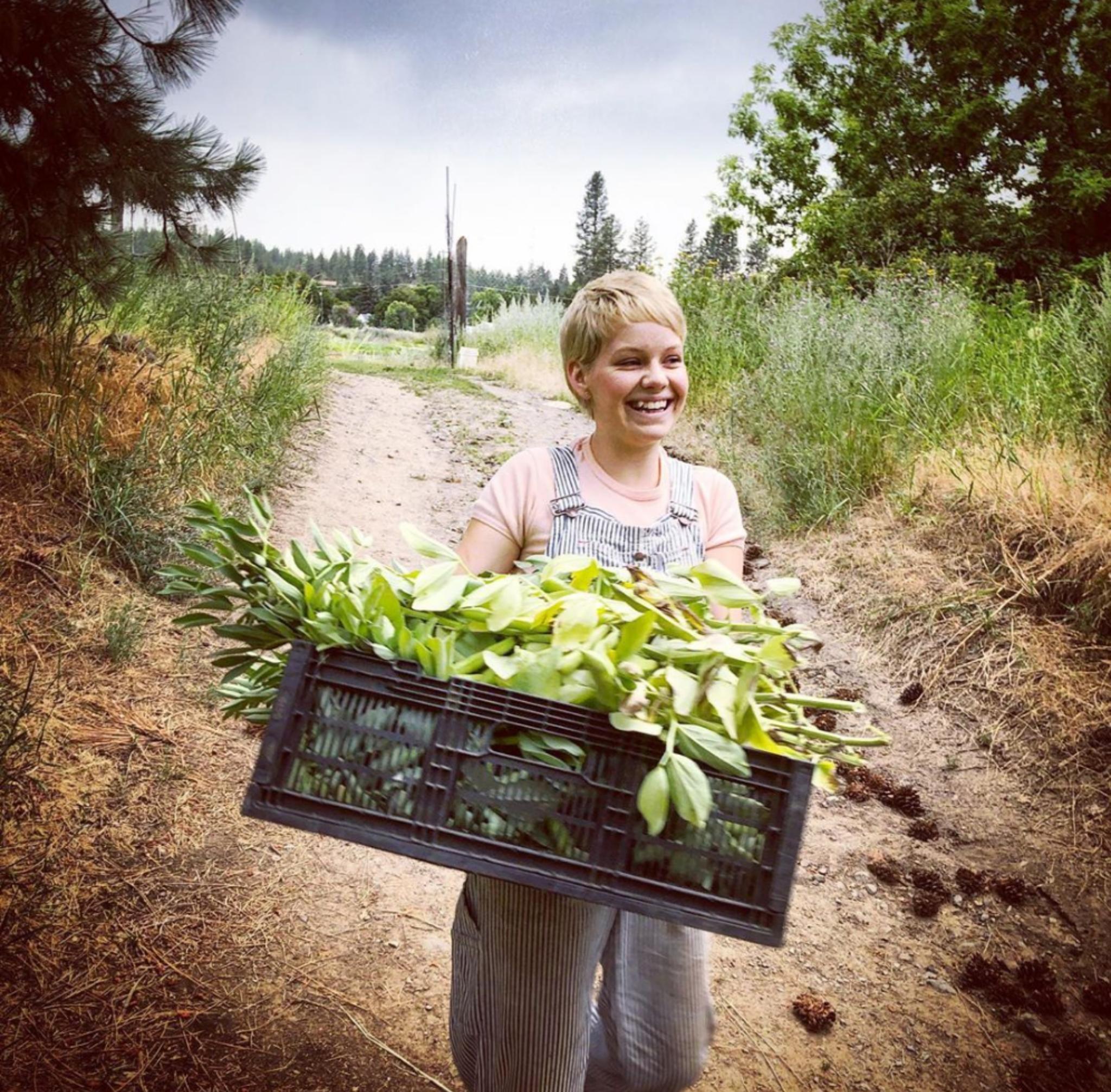 Fava bean harvest at Urban Eden Farm