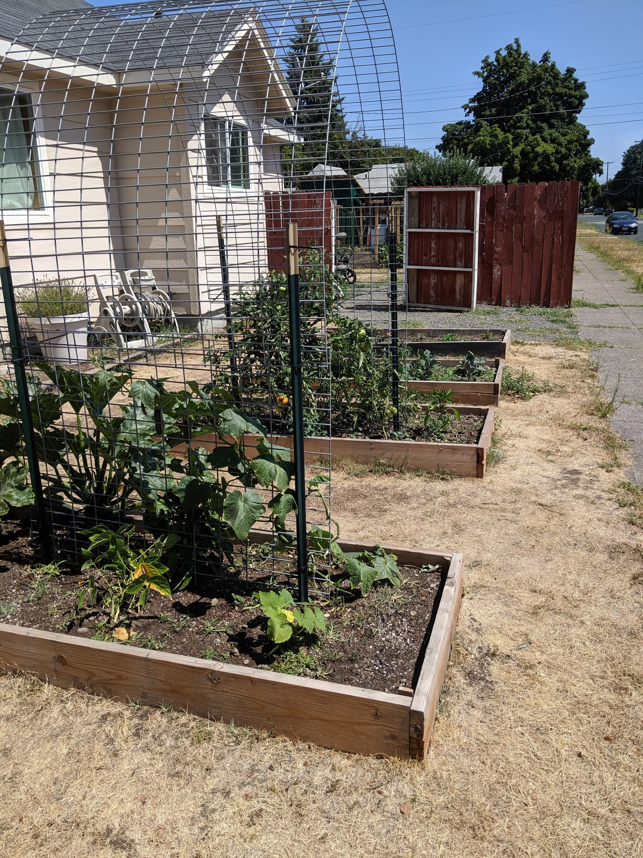 Gleaning Beds : Community members can stop by and harvest from these beds in Phillip and Shaneese's front yard! They hope to fill their entire front lawn with gleaning beds.