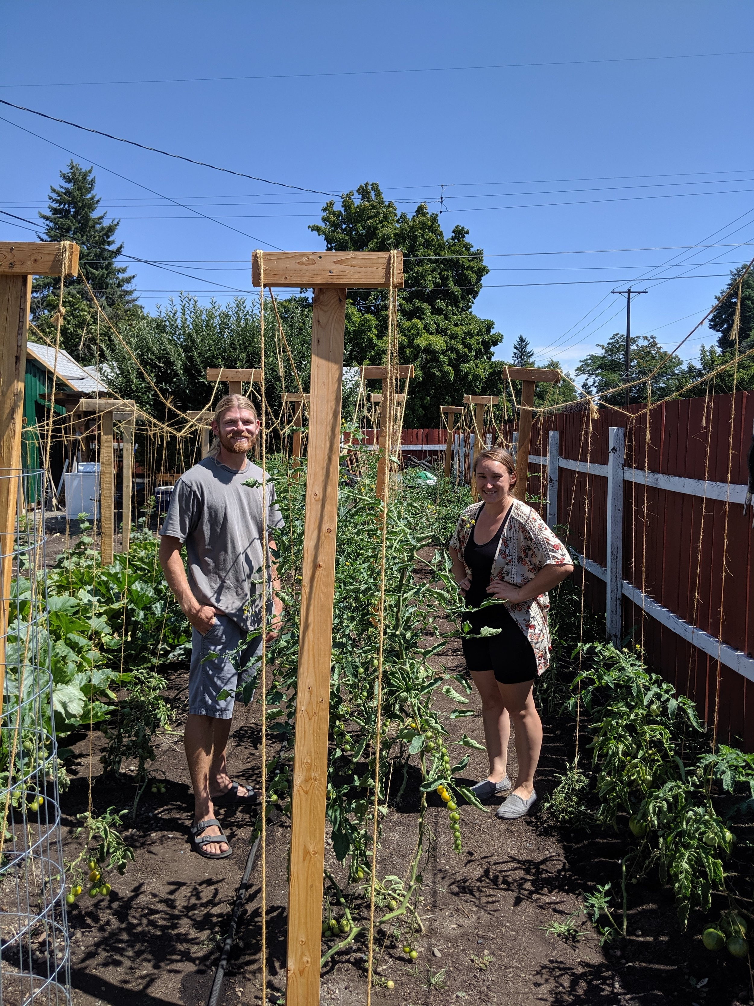 Phillip and Shaneese in their rows of tomatoes. Hanging tomatoes on a line makes picking easier and helps to keep away diseases like blight.