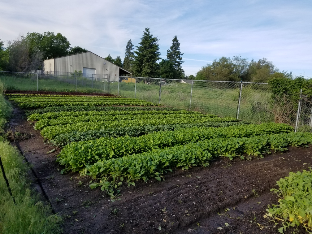 Courage to Grow is a multi-site farm, located in the Hillyard Neighborhood, Spokane Valley, and West Plains. This plot is located in Spokane Valley.