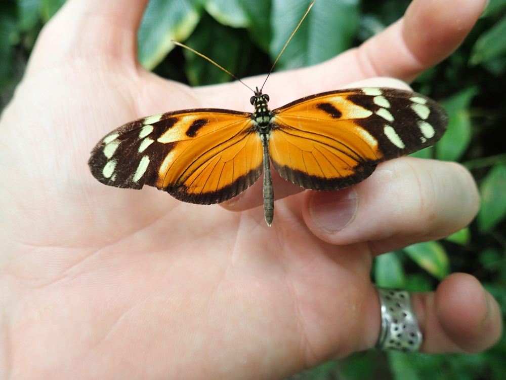 orange butterfly.jpeg