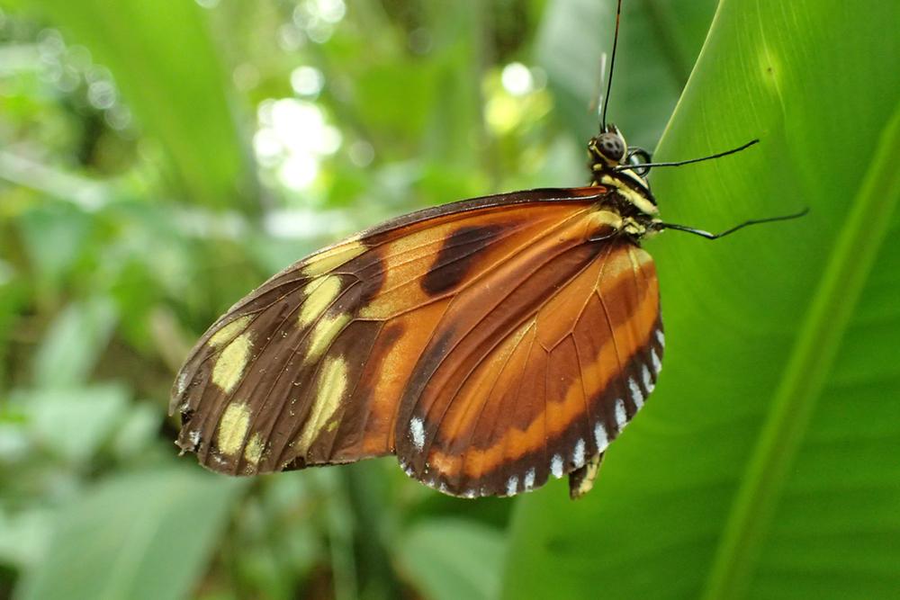 brown butterfly.jpeg