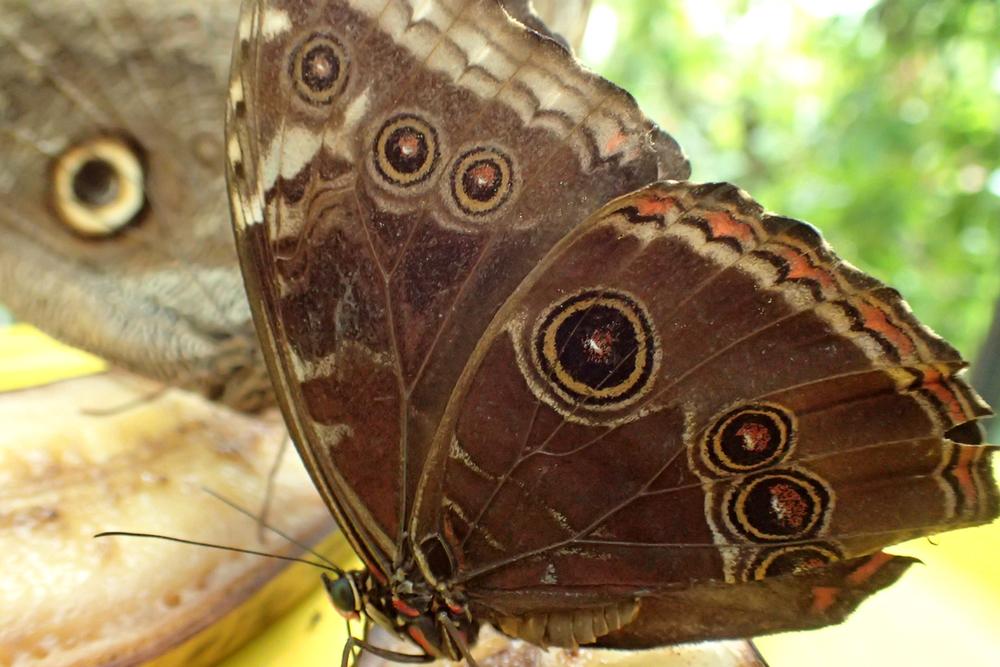 wing pattern.jpeg