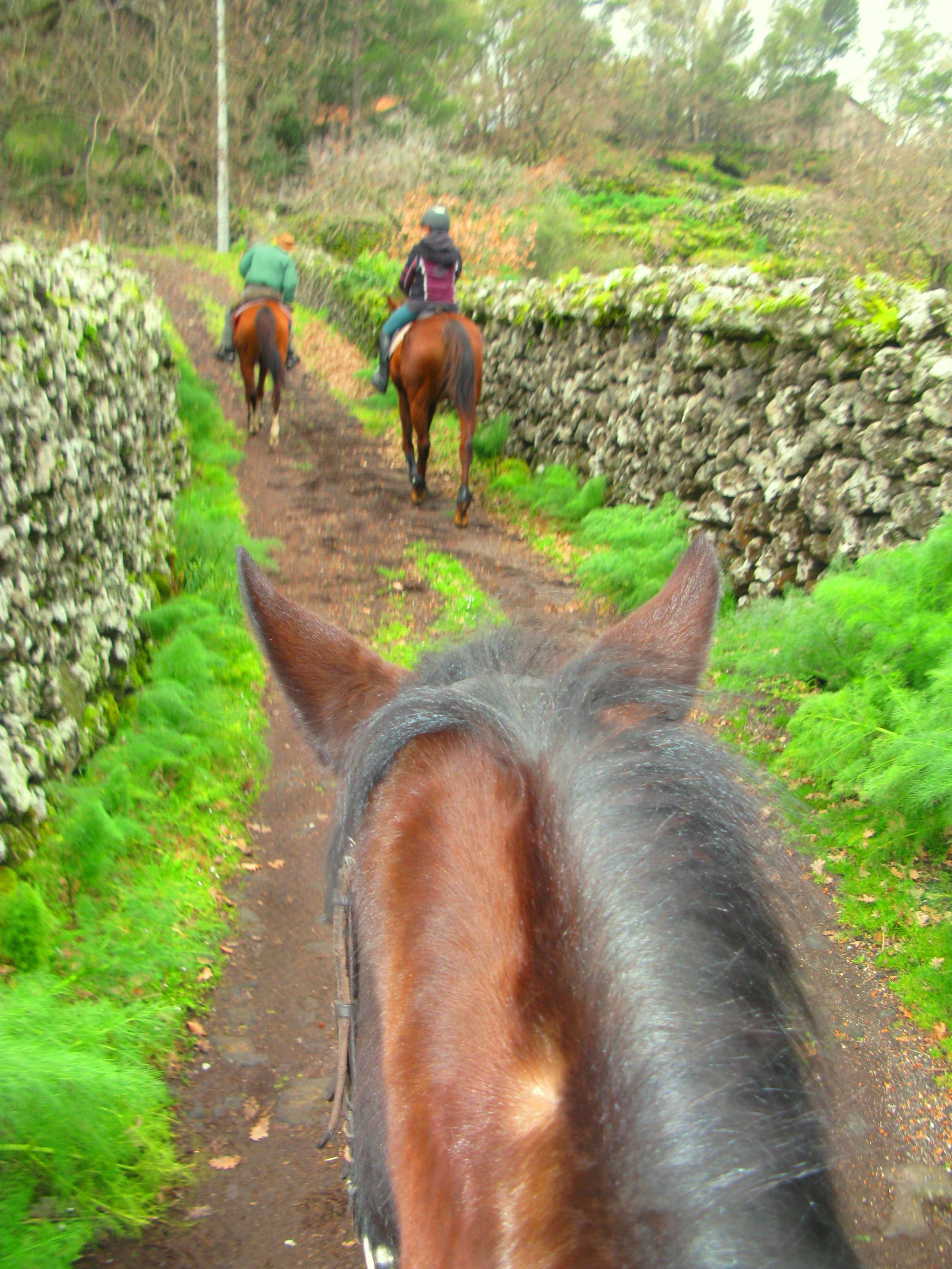Among the vineyards on horseback