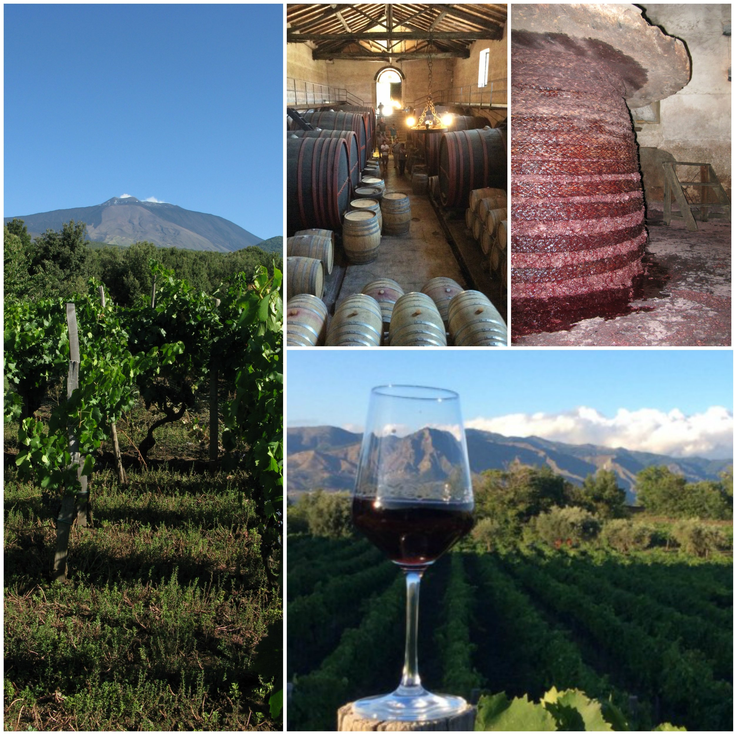 wine-tour_etna-wine-lab
