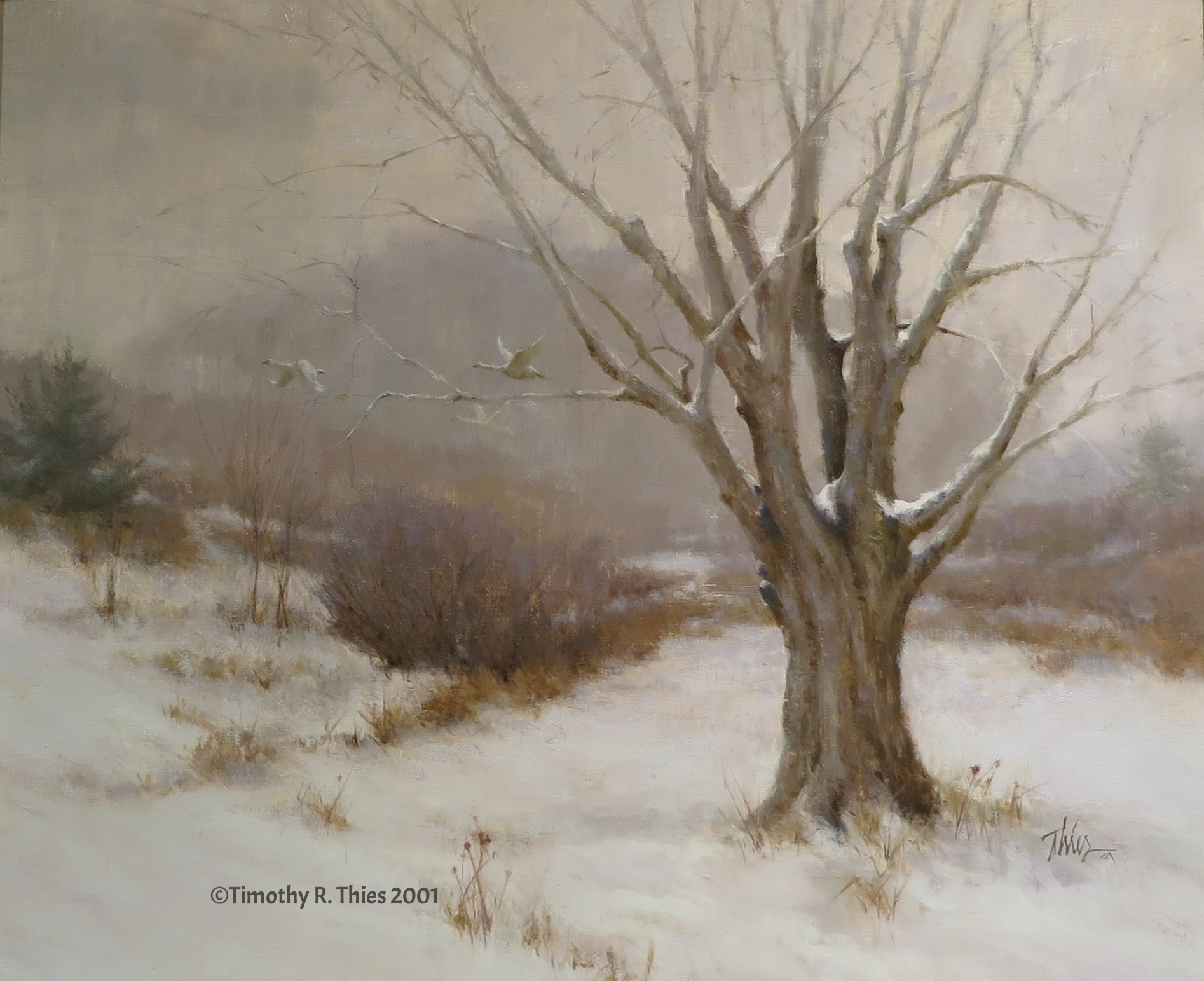 """""""Winter Maple"""" Oil 20"""" x 24"""" ©Timothy R. Thies 2001"""
