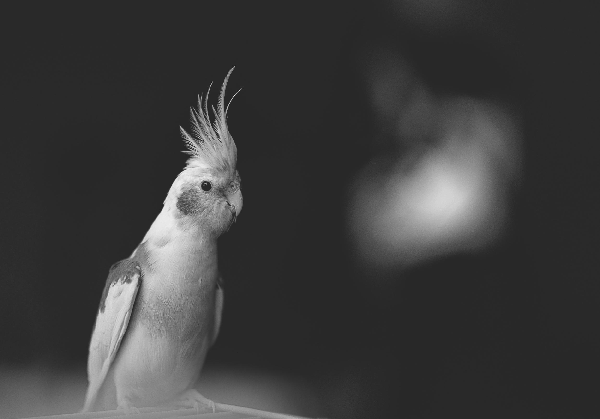 Bird 14 bnw.jpg