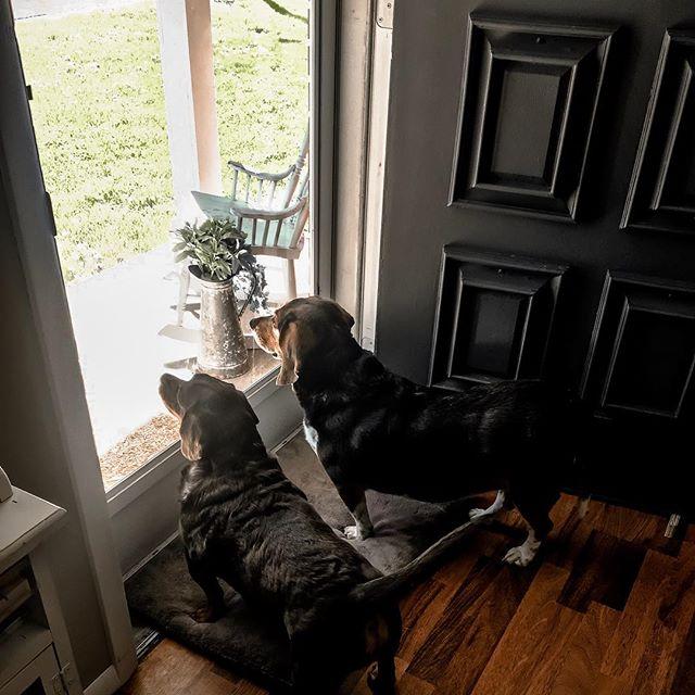 My boys 😍🐶🐶 . . . #dog #dogsofinstagram #dogs #dogstagram #doglover #dogoftheday #doglife #doglovers #doggy #dogsofinsta #dogsofig #doggo #doglove #dogslife #dogsofinstaworld #doggie #dogphotographer #dogphotography #dogofinstagram #dogmom #dogsofinstgram #dogmodel #doggies #korievansphotosblog #photographytips #beginnerphotographer #nikon #canon #amaturephotographer #petphotography