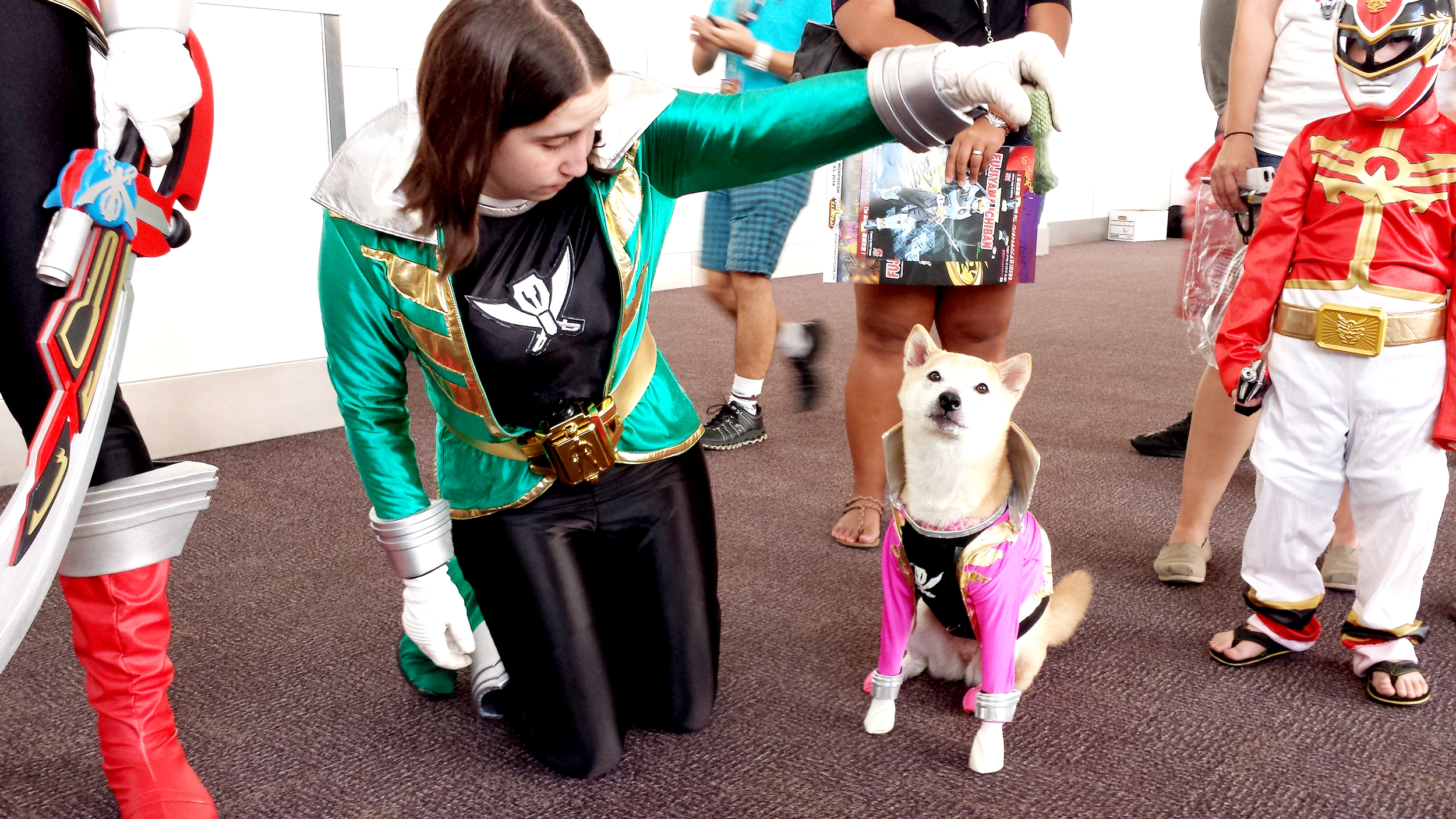 Even this Shiba got into the Gokaiger sprit.