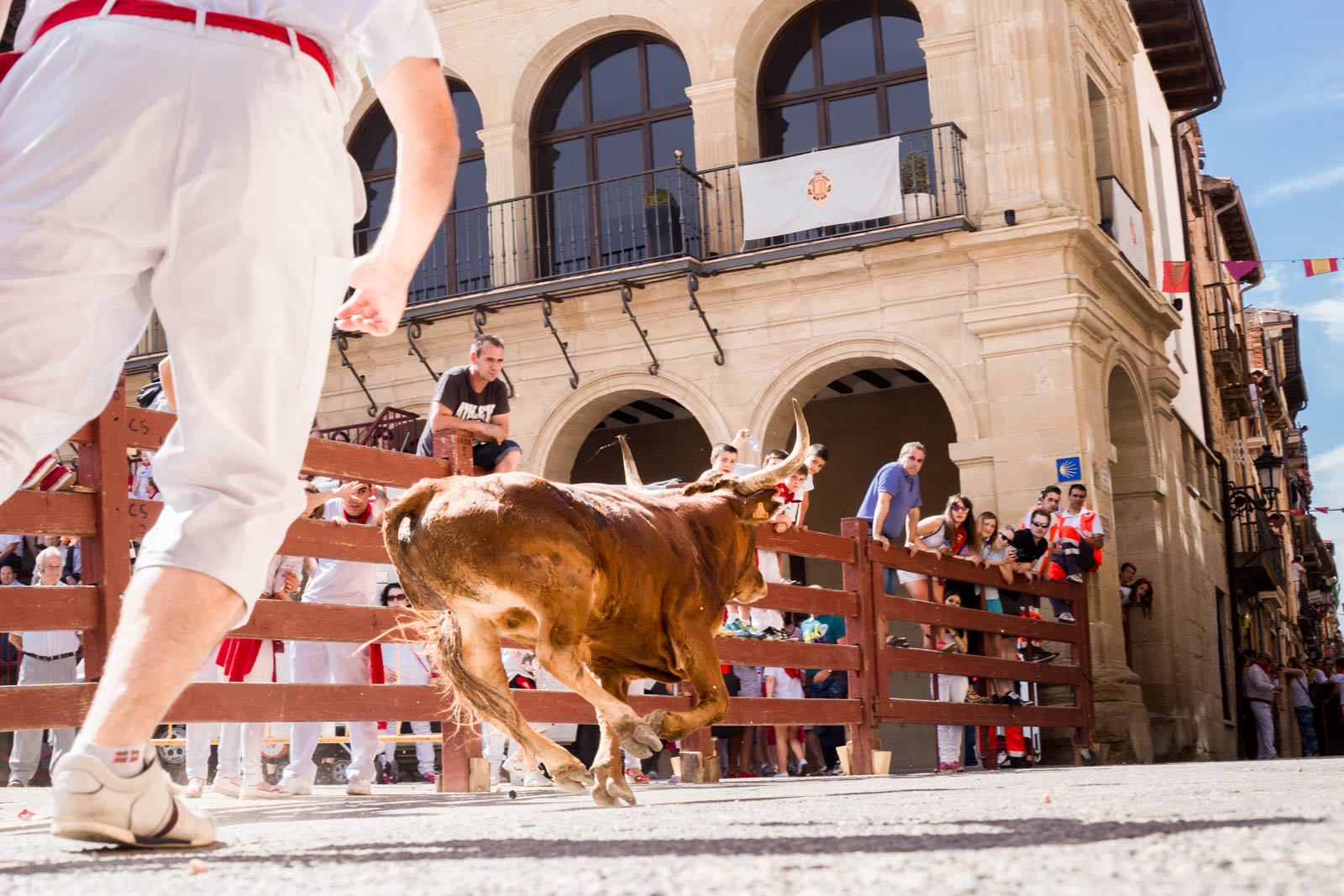 Bulls on the Camino