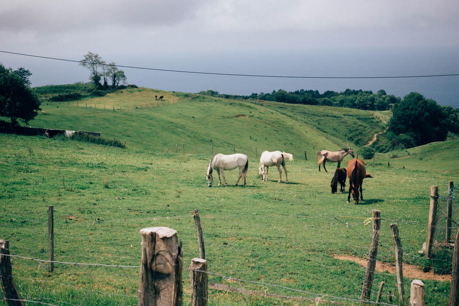 Camino North - Day 03 - Copyright Ivan Blanco - LR-5782.jpg