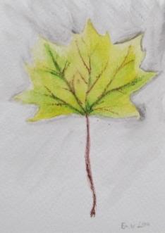 leaf emily 2.JPG