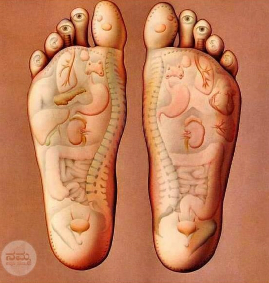 An example of a reflexology chart, demonstrating the areas of the feet that  correspond with different  organ systems, functions and parts of the body