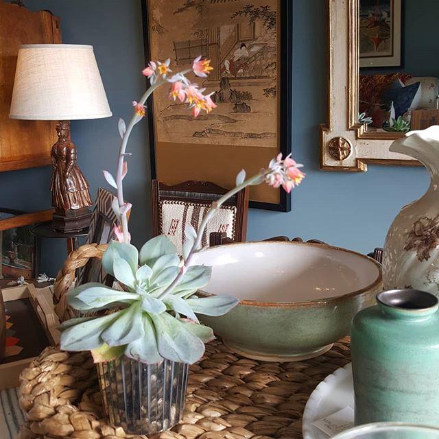 Our potted succulent gifts are so sweet around the shop, and then the Echeveria offers up this delightful bloom. #maudewoodswh . . . . #maudewoods #maudewoodsstore #succulentlove #succulentsofinstagram #bluewalls #shopvibes #shopshot #decoratewithvintage #japanesescreen #decoratingwithantiques #tabledecor #vintagetextiles @agceramics.shop #handmadepottery #planthappiness #homedecorstore #woodlandhillscalifornia #venturablvd #greenaccents #losangelesinteriordesigner #valleycountrymarket #wegiftwrap