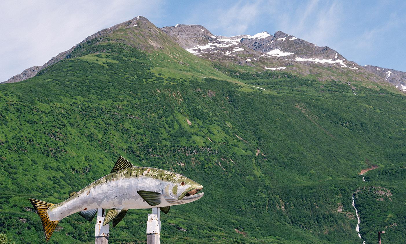 fish1.jpg