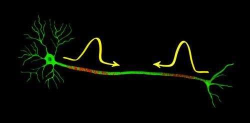 nerveimpulse.jpg