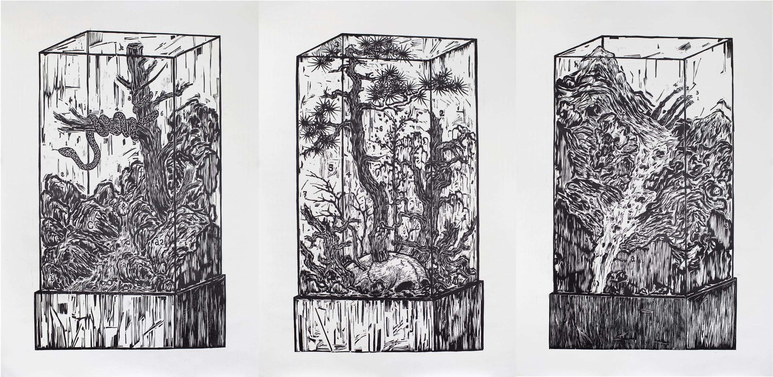 Ni Youyu 倪有鱼, Specimen Cabinet (Triptych) 标本柜 (3联幅), 2011, Woodcut print on paper 纸本黑白木刻, 105 x 72 cm x 3