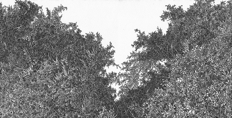 Zhou Fan 周范, Forest 4 森林 4, 2013, Archival ink pen on cotton paper 棉纸、钢笔, 18.5 x 25.8 cm