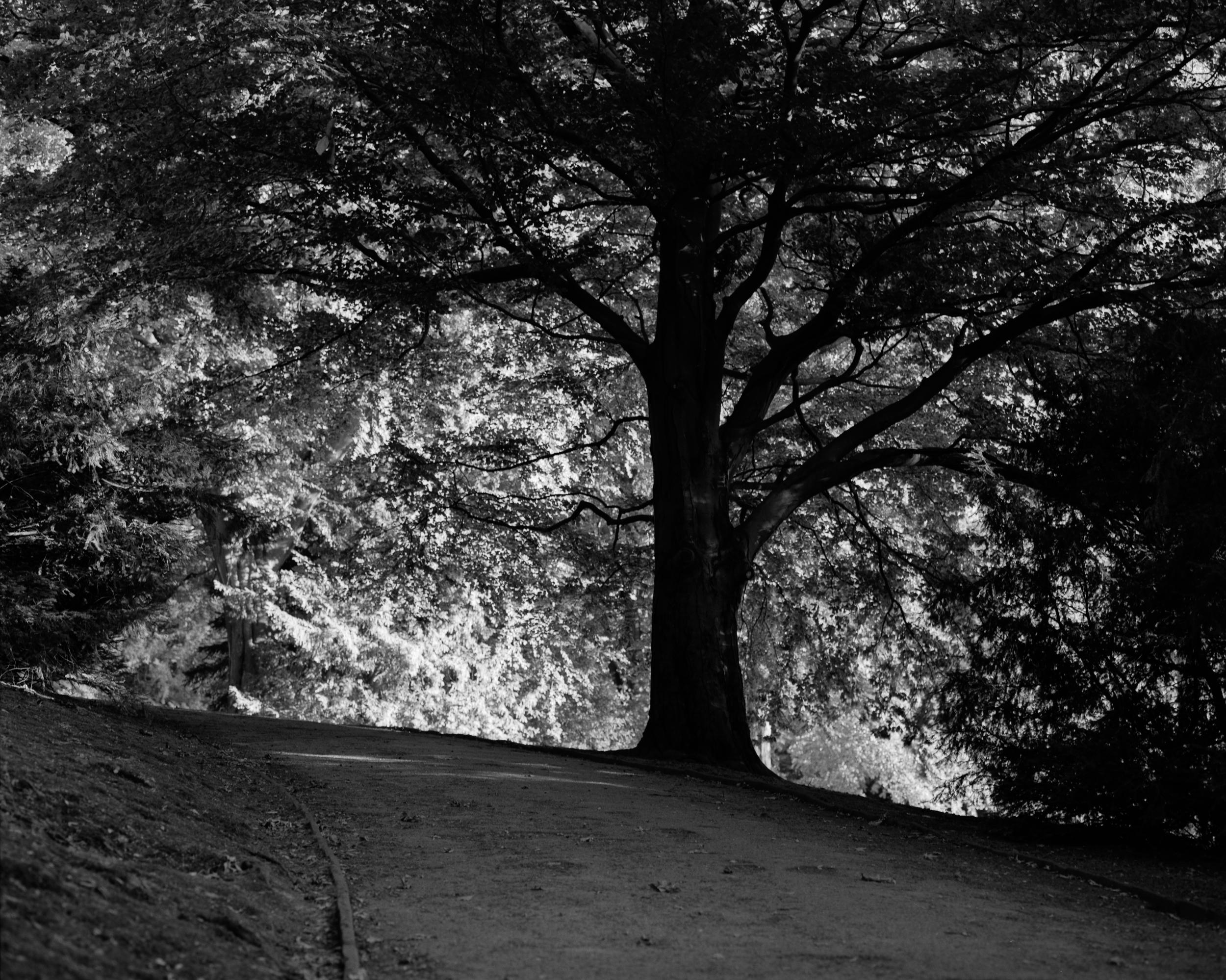 Stadtpark_03_2500px.jpg