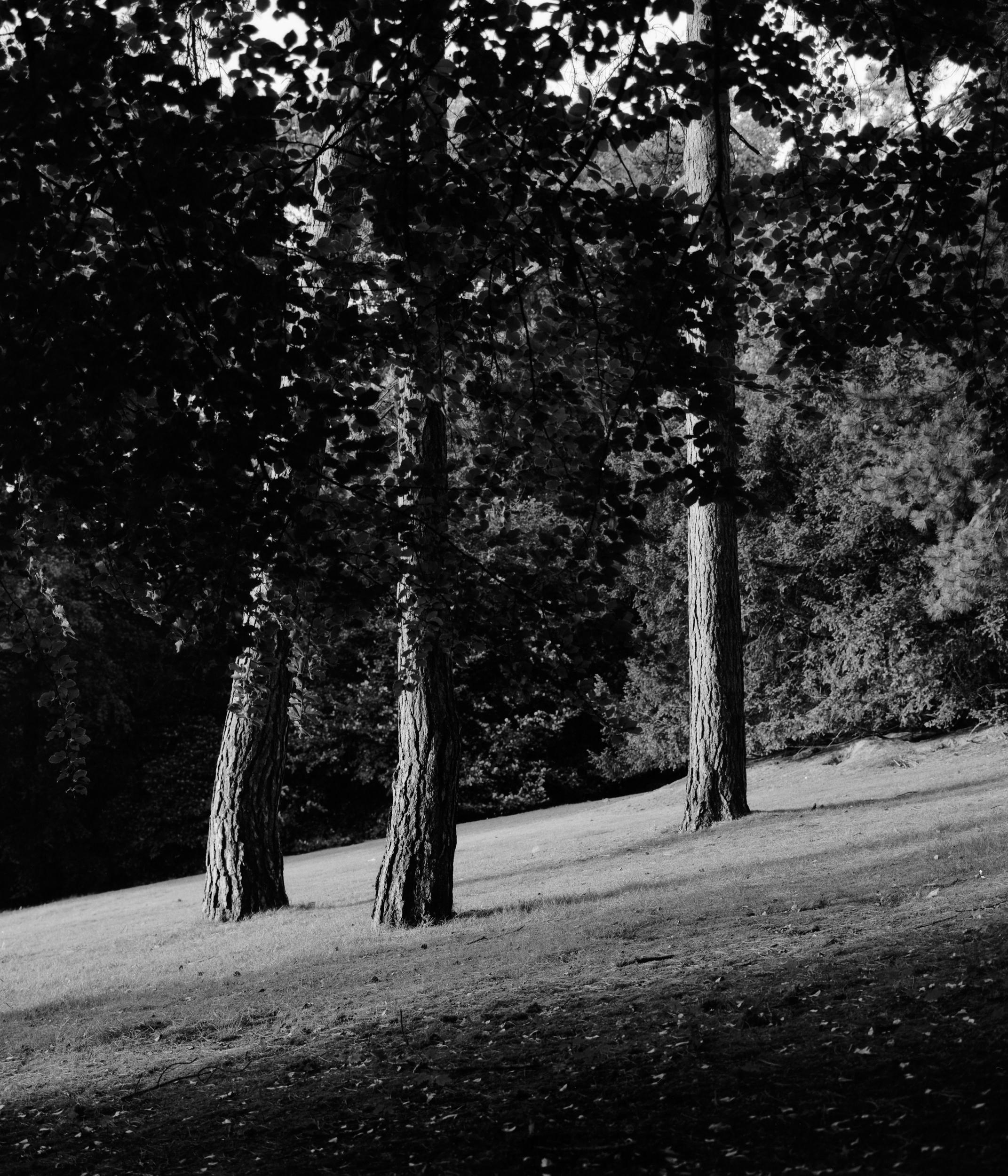 Stadtpark_10_2500px.jpg