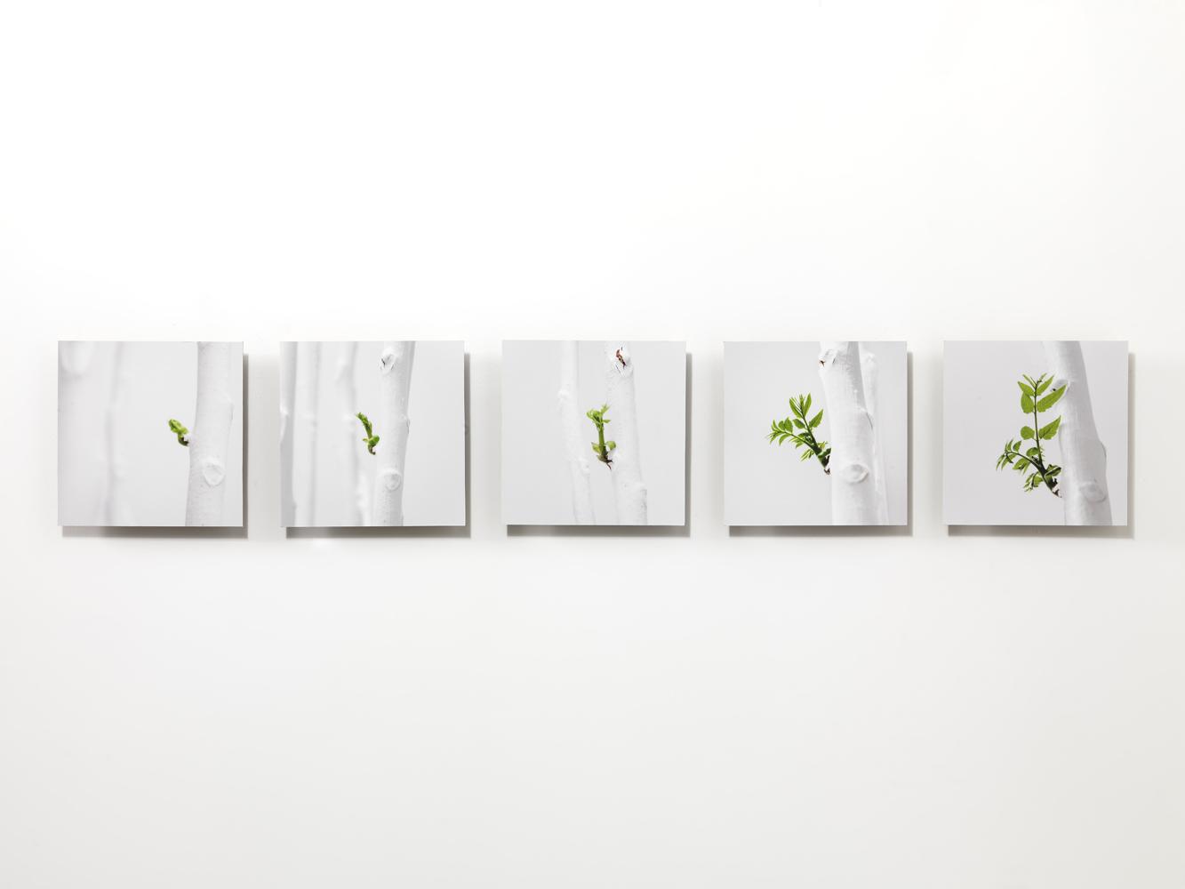 hic natura vicit , 2012 stampa digitale su alluminio cm 110 x 18