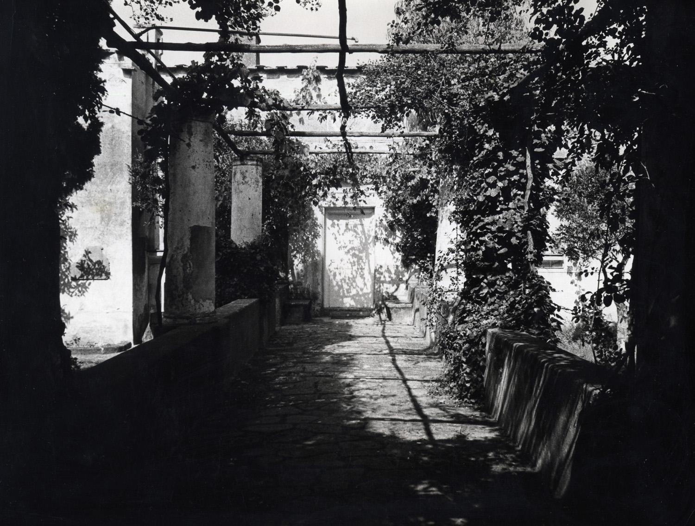 pergolato di villa Orlandi/Villa Orlandi's Trellis, 1971