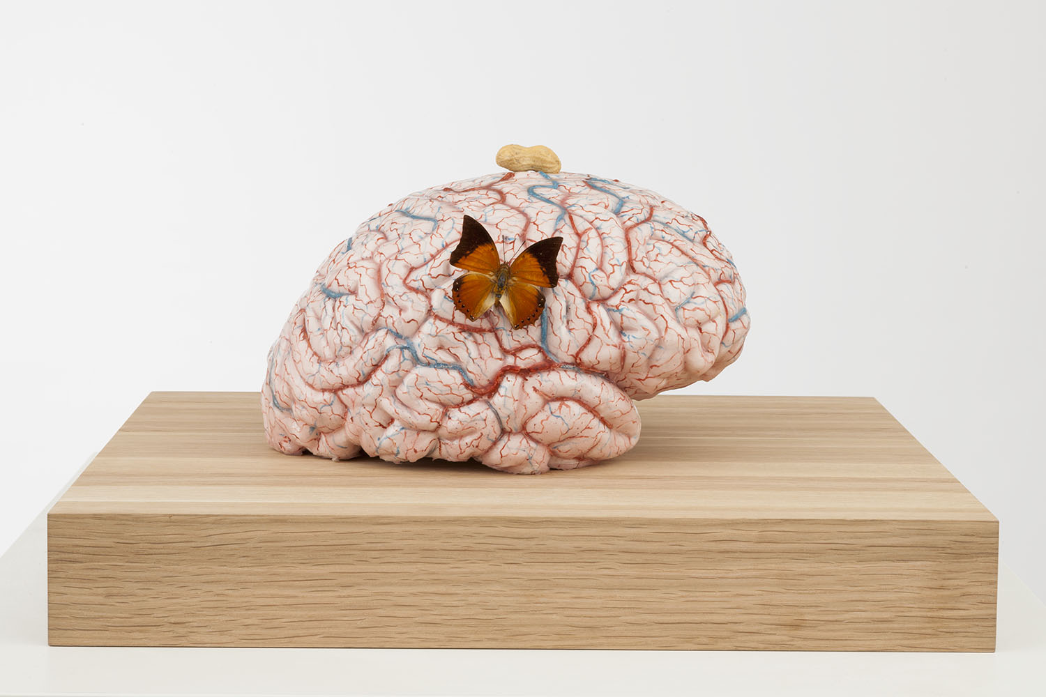 The sweet and satisfied brain of the lab-monkey , 2014,silicon, pigment, wax, wood, metal, insects,50x45x28 cm Ph. Pat Verbruggen ©Angelos bvba