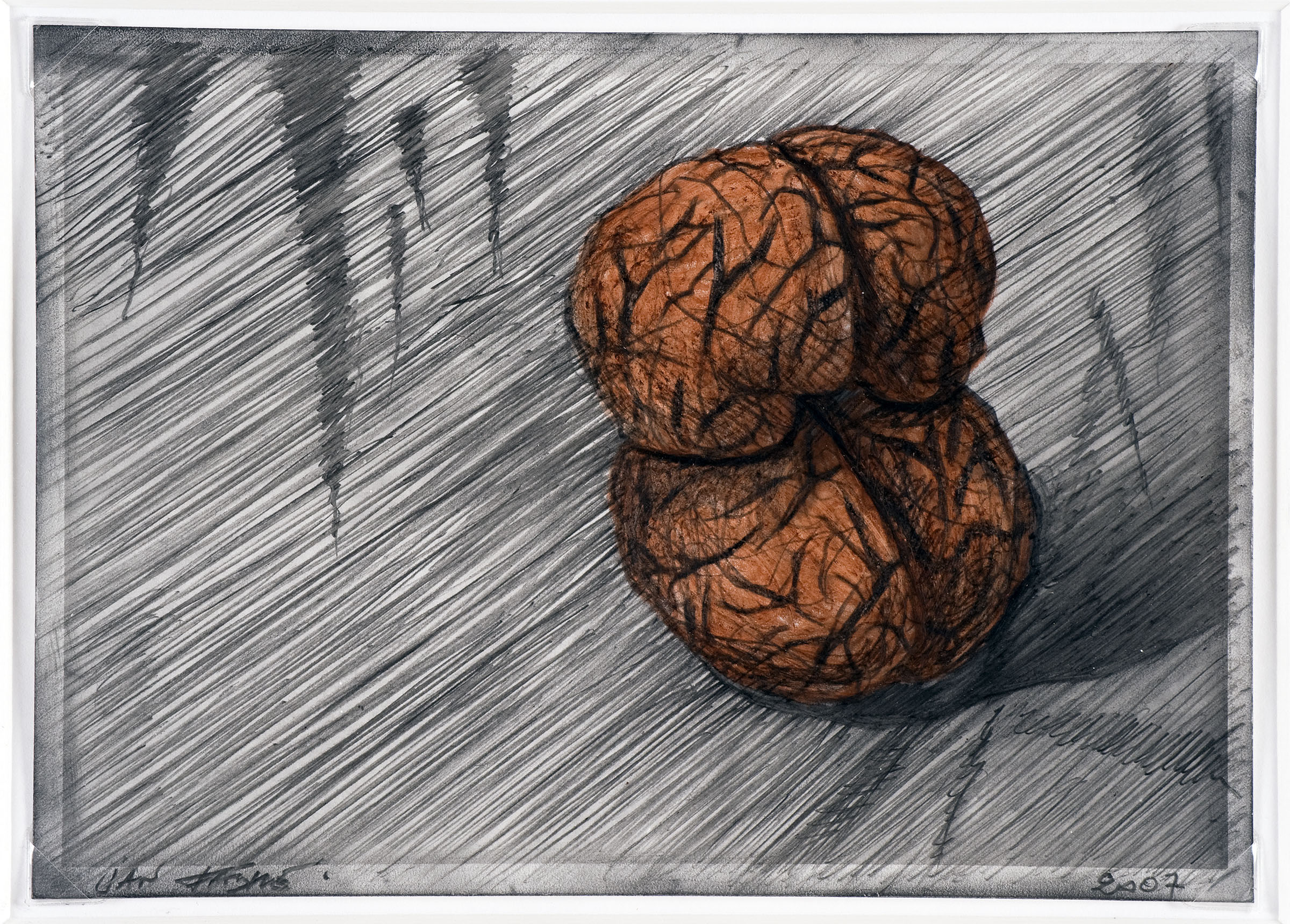 Two nuts , 2007,colour pencil and watercolour on photographic paper 12,7x17,7 cm Ph. Mario Gastinger ©Angelos bvba