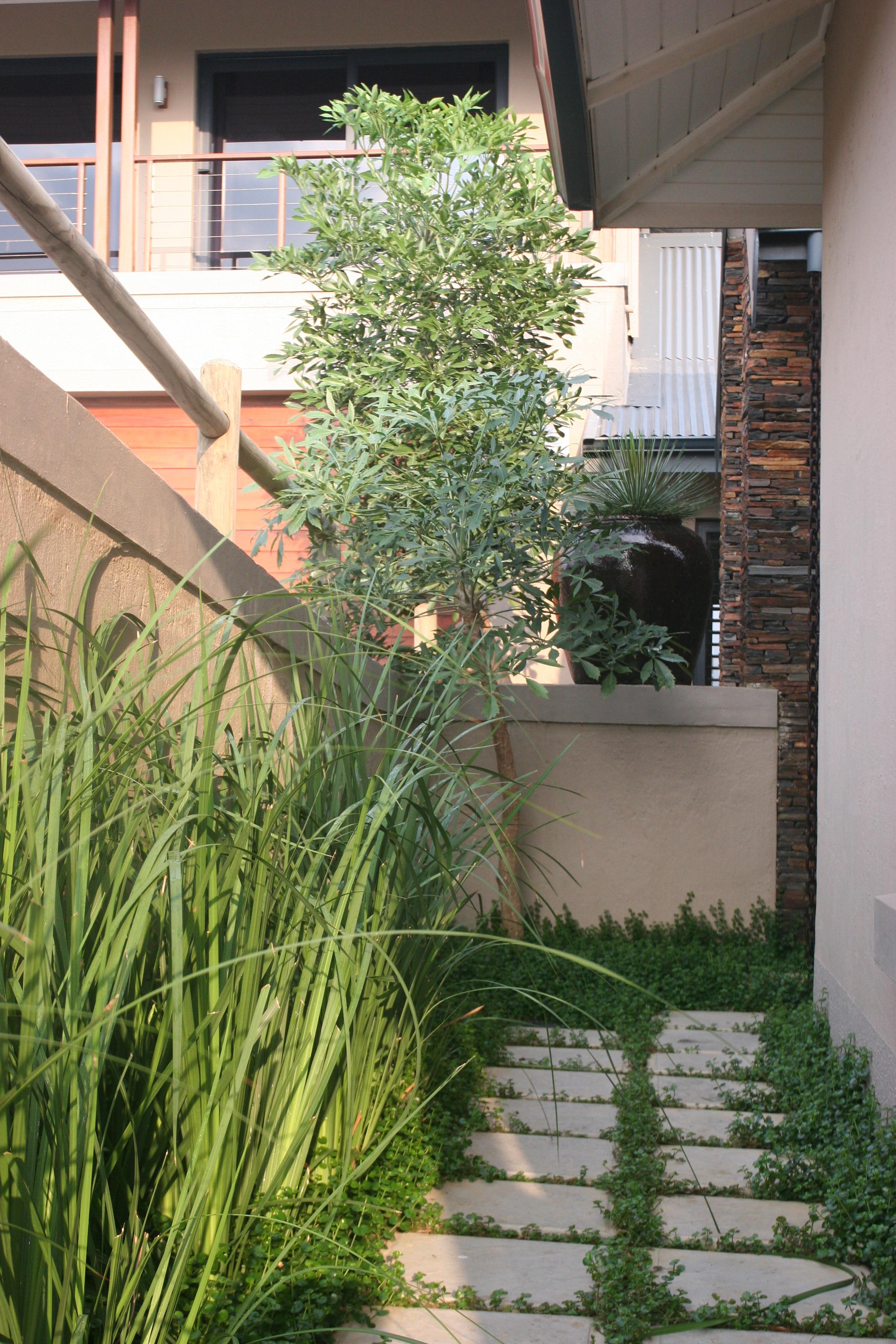 Landscaping Ballito - Professional landscape Design.JPG