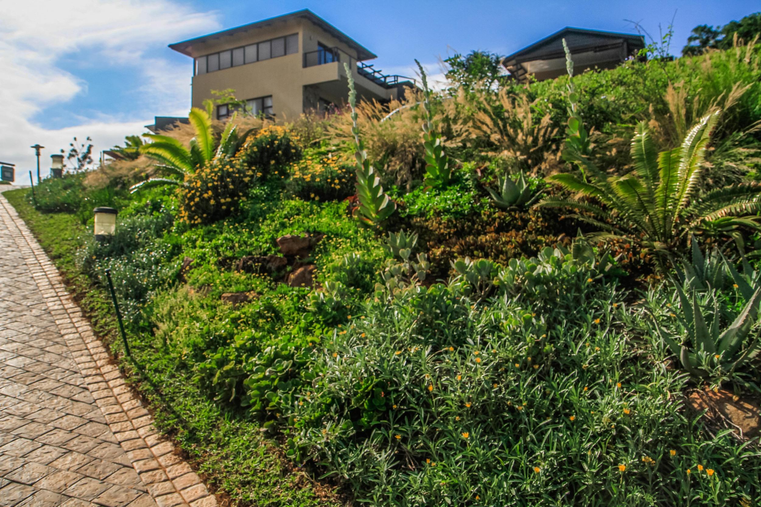 Eco Balance Landscaping | Planting Indigenous Gardens
