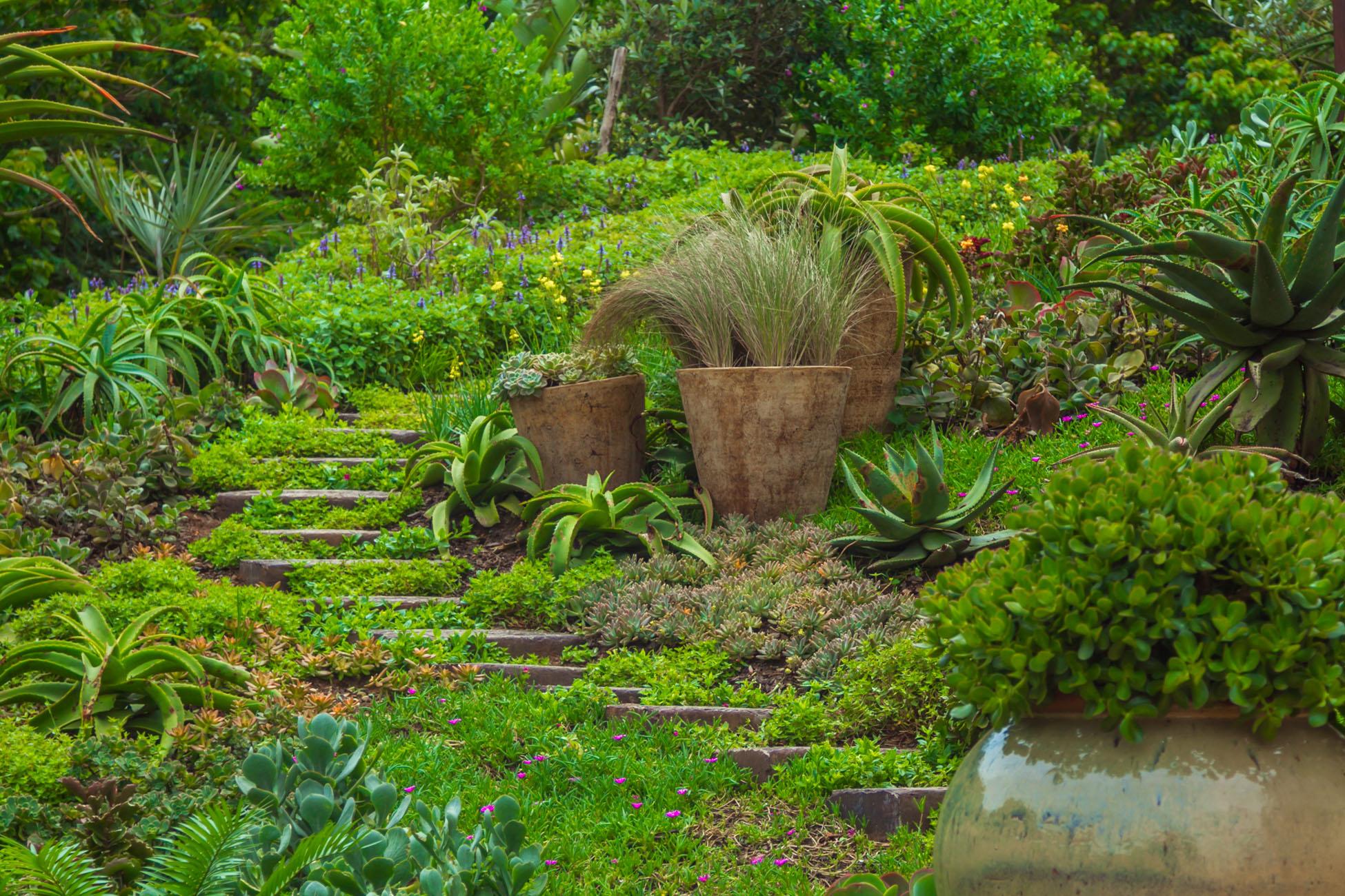 Domestic Garden Maintenance -