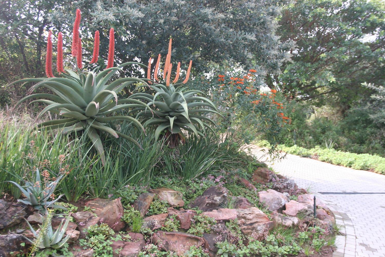 Creating A Succulent Rock Garden Eco Balance Landscaping