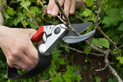 Pruning builders.co.za