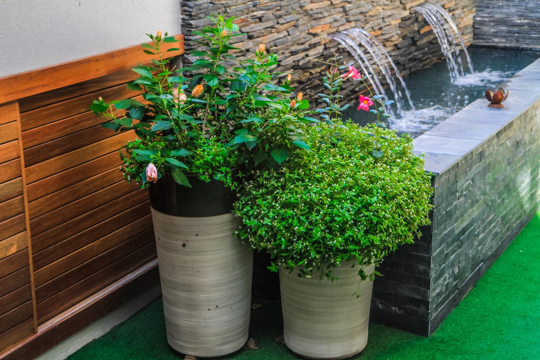 veranda container gardens