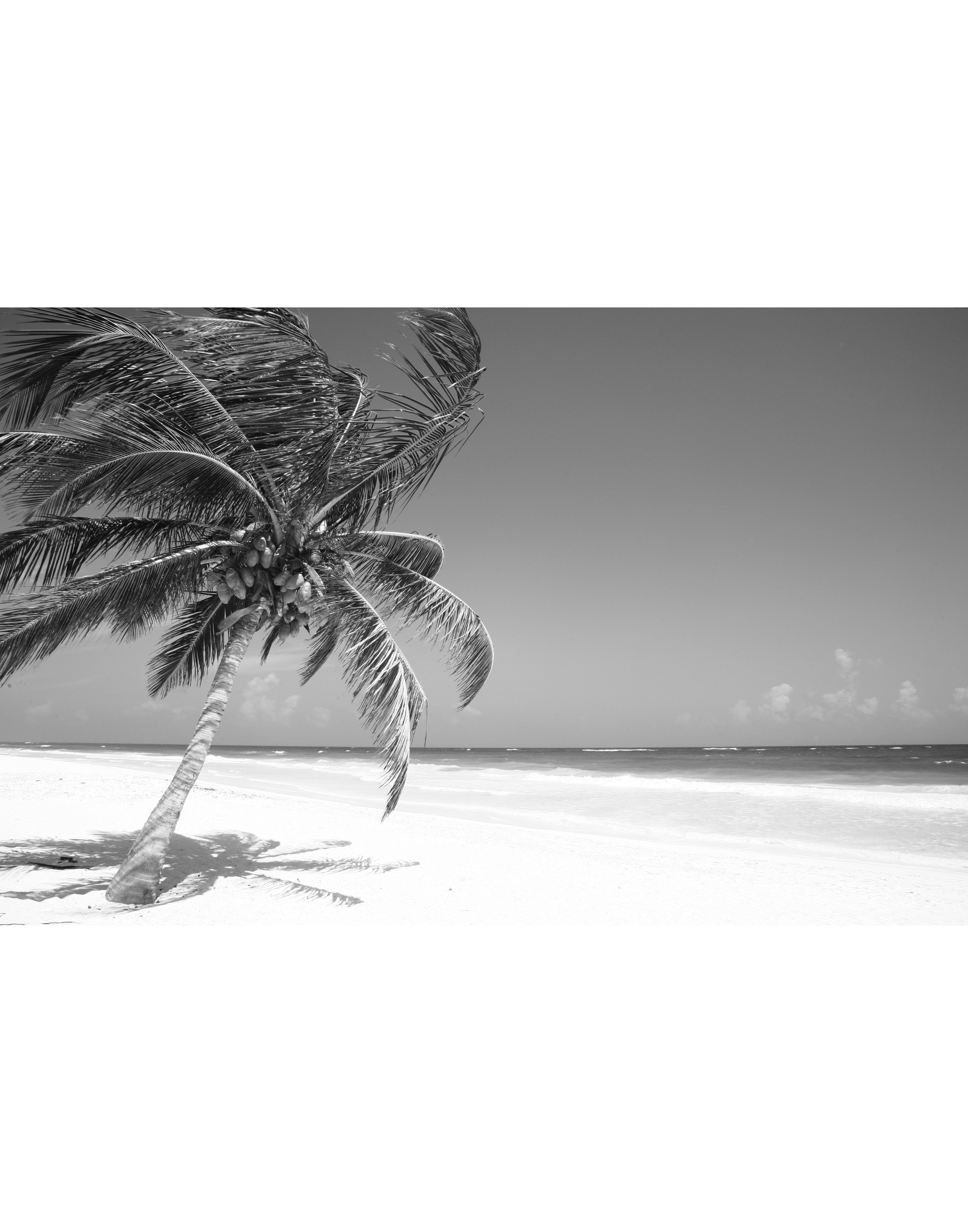 Mexican Palm Portfolio.jpg