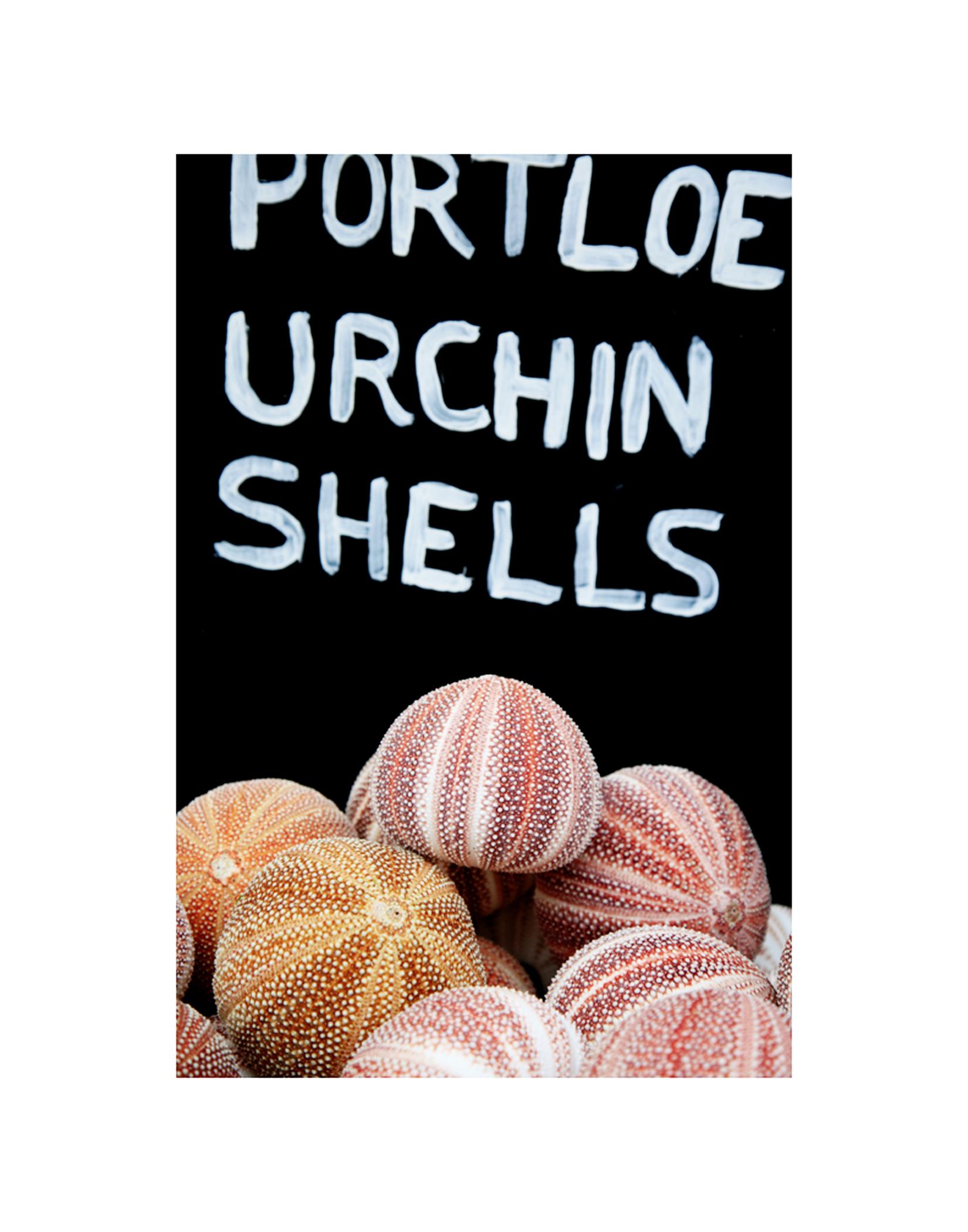 Urchin Shells.jpg