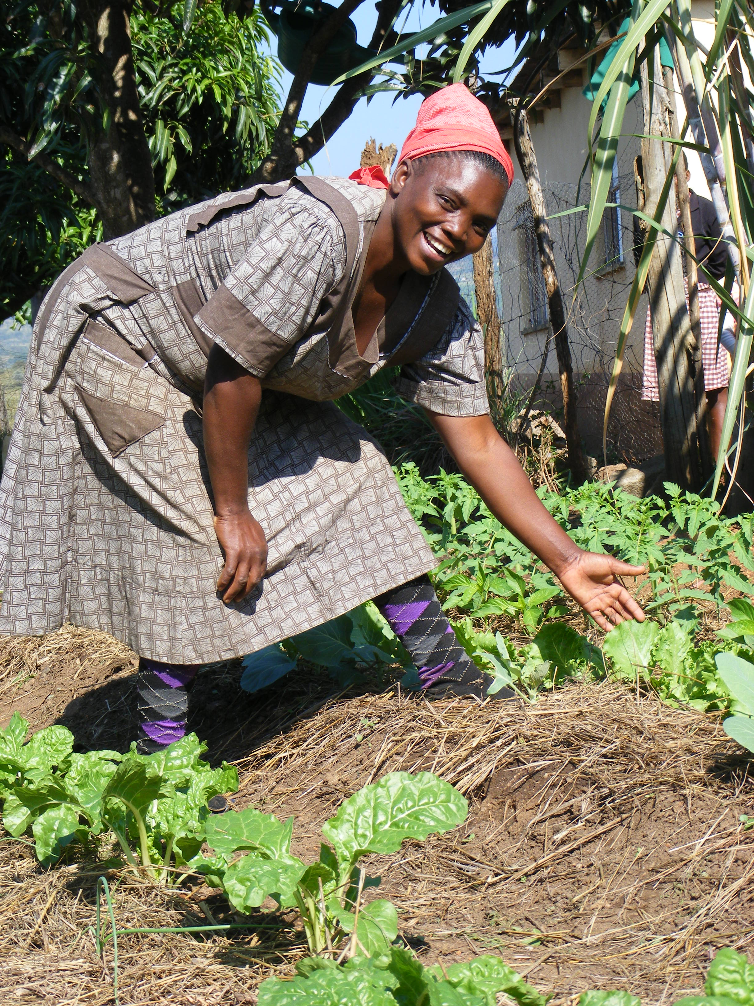 Futhi Fakhudzi:    I used to spend 250 Lilangeni (about £18) a month on groceries. Now I grow peppers, cabbage, tomatoes, leak, chard, spinach, beet, lettuce carrots and mango. With more money saved, and an income from my garden, my 3 older children can attend school. I am teaching my neighbours, and my sister next door, who now has a plot of her own. We are growing together.