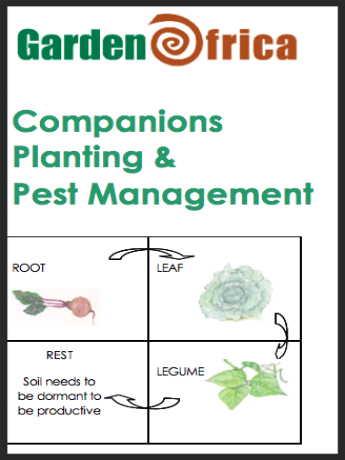 Managing plant & soil health with companions and rotation