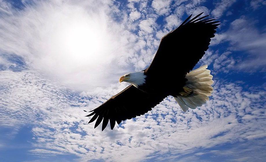 fly like an eagle.jpg