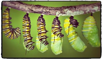 caterpillar cocooning away for his bucket list life to begin_2.jpg