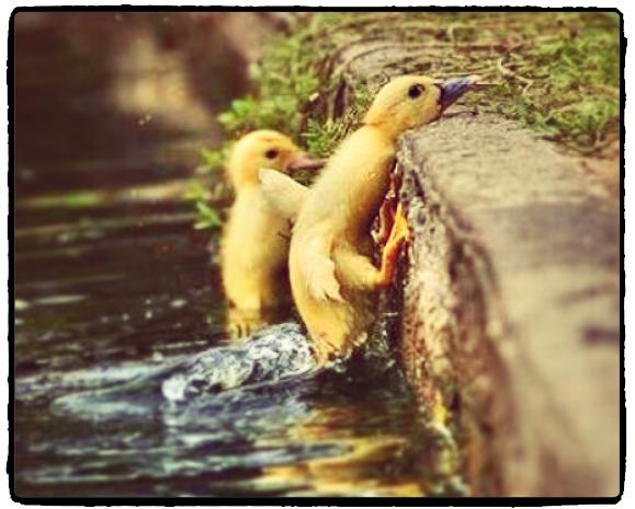 duck challenge_2.jpg