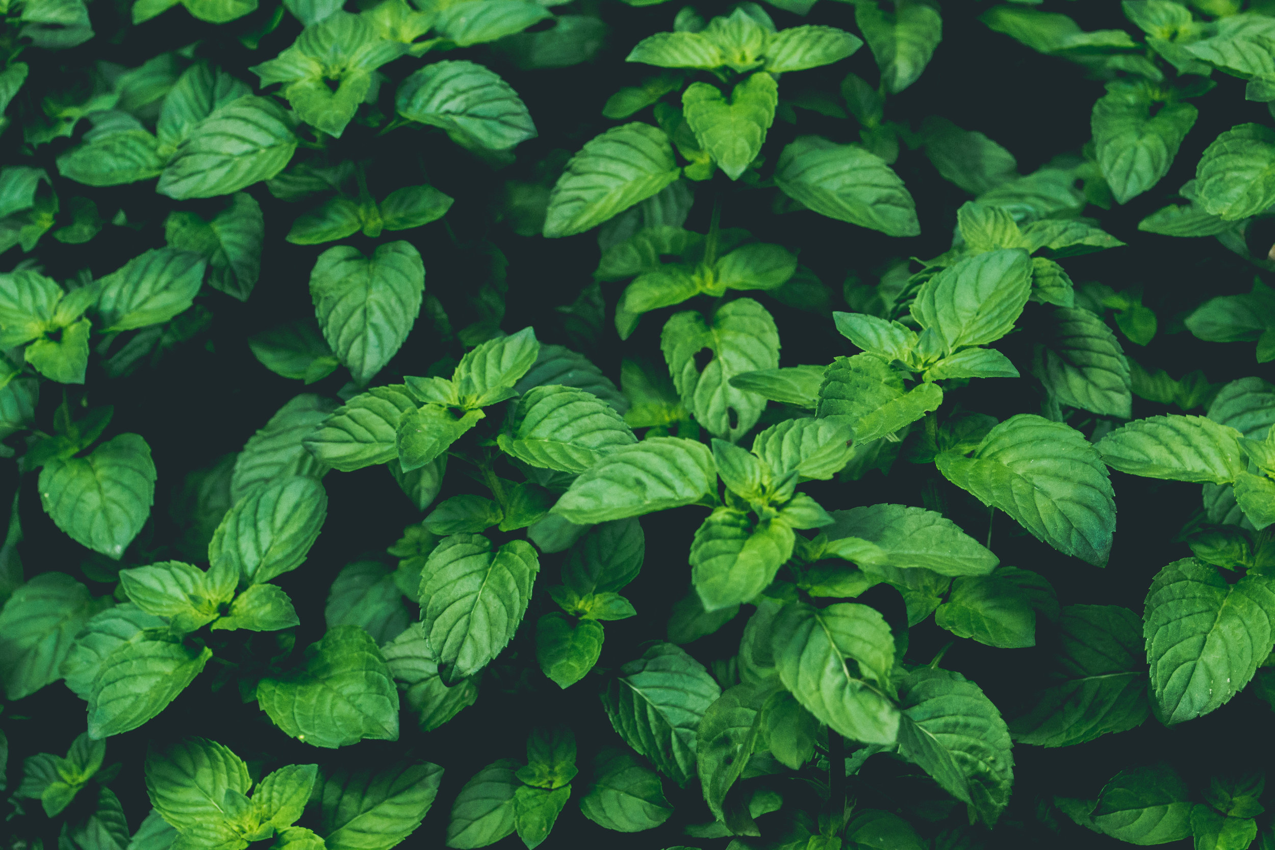 PURE GREEN -