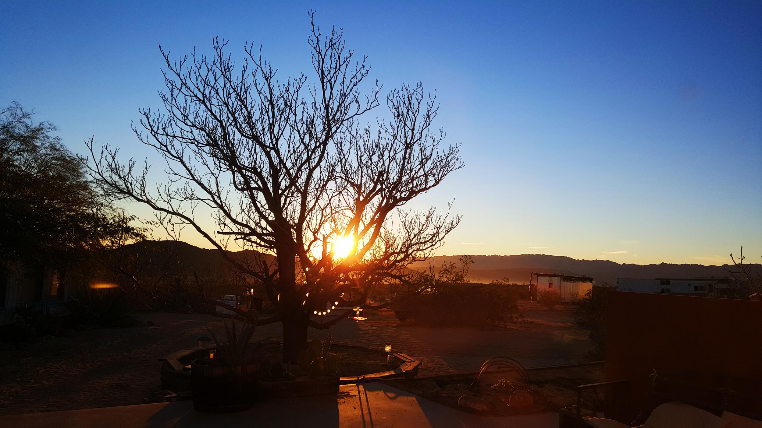 Desert sunrise in Joshua Tree, CA