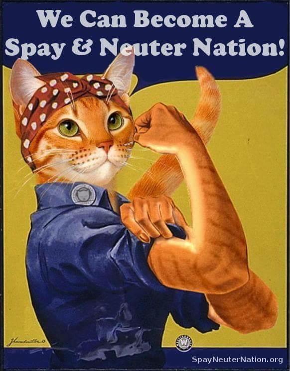 Spay Neuter Nation.jpg